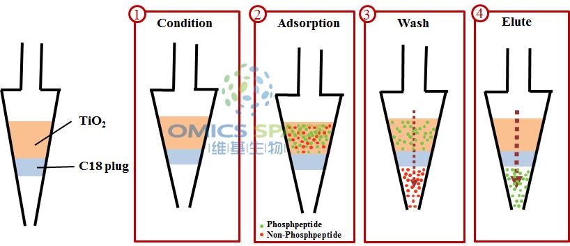 phosphopeptide