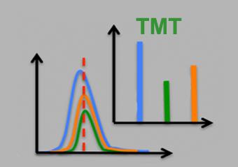 TMT标记定量