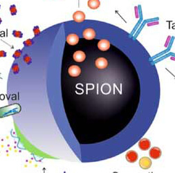 项目论文|PAMA-Arg刷磁性复合纳米球对磷酸化生物分子的高效富集研究-Journal of Materials Chemistry B-201812