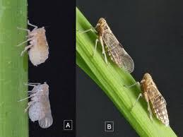 项目论文|云南野生稻对褐飞虱特异抗性的iTRAQ比较蛋白质组学研究-BMC Plant Biology-201901