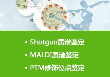 蛋白质定性