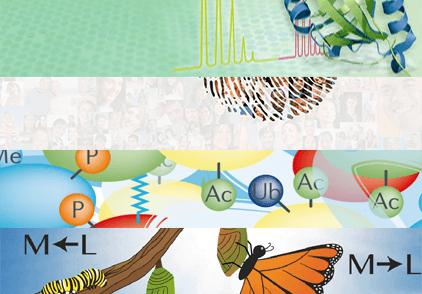 蛋白组/代谢组学
