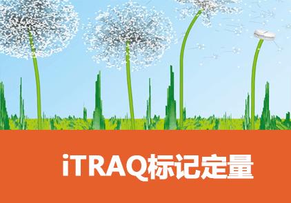 iTRAQ标记定量