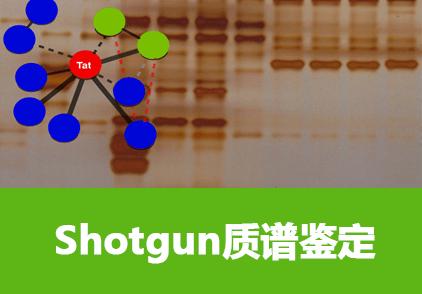 Shotgun-LCMS鉴定